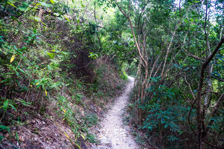 紫羅蘭山徑雖窄,但平緩易走,很適合忙碌的香港人。